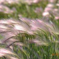 Степная трава :: юрий Амосов