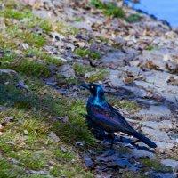 Птичка весной :: Яков Геллер