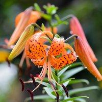 цветок :: Дмитрий Прилепкин