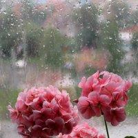 Когда за окном дождь, с цветами уютней!.. :: Надежда