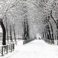 1 января 2012 года :: Елена Аксамит