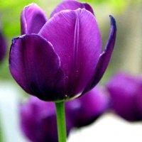 цветок :: Pasha Zhidkov