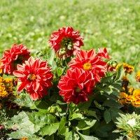 Цветы :: Владимир Белов