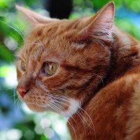 Мой кот Кокос!!! :: Виталий Виницкий