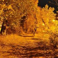 Золотая осень :: Дима Макаров