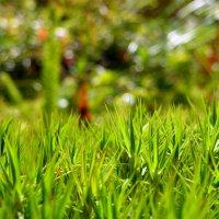 Лесной мох :: Анастасия Белякова