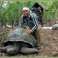 Черепаховый рай :: Евгений Печенин