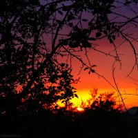 Трехцветный закат :: Анастасия Зубарева