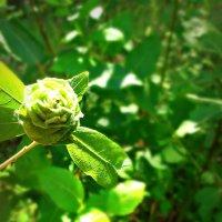 Заболевание листьев :: Светлана Филиппова