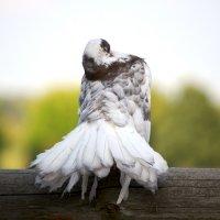 Спящий голубь :: Марина Анохина