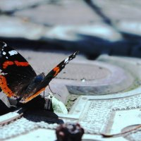 Бабочка :: Настя Поликутина