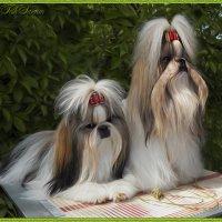 Пара хризантем. :: Ольга Нагаева