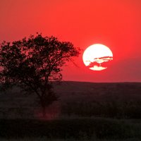 закат :: Marina Timoveewa