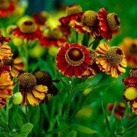 Летние цветы. :: Николай Сидаш