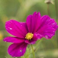 Цветок :: Екатерина Рябинина