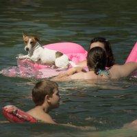 собаки как  люди... :: Андрей Семенов