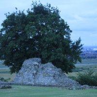 Дерево :: elviira jukka
