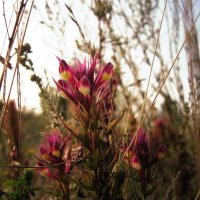 Летние травы :: Lilia Kamalova