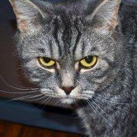 Кошак :: Алена Реброва