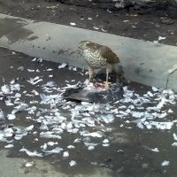 Пёрышки у птички . . . :: Константин Фролов