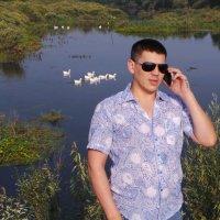 Алло,это не лебеди! Это Гуси! :: Олег Петрушов