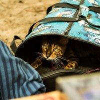 кот ученый :: Max Hyde