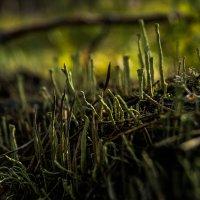 сказочный лес :: Max Hyde