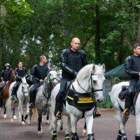 Конная полиция :: saratin sergey