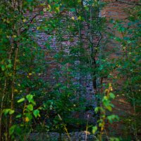 В берёзовых джунглях :: Яков Реймер