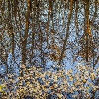 Уж небо осенью блистало.... :: Антуан Мирошниченко