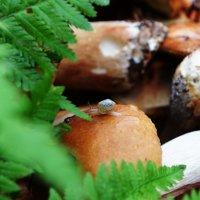 Поход за грибами :: DarishaDDD DDD