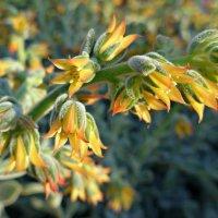 Жёлтые цветы :: Nina Yudicheva