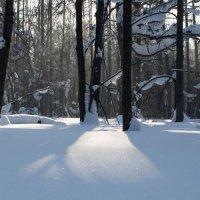 Утренний лес :: Дмитрий .