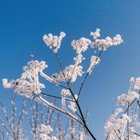 Зимние цветы :: Олег Архипов