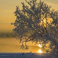 Золотистый закат...... :: Ричард Петров