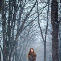 Таинственный лес :: Альбина Прокопенко