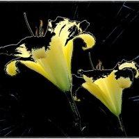 Две лилии :: Нина Корешкова