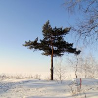 Одинокая сосна . :: Мила Бовкун