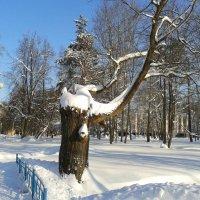Зимний день :: Мила