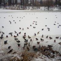 Зимовка :: Serg