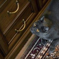 Любимый кот! :: Вячеслав