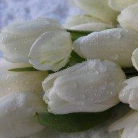 Тюльпаны в капельках :: Mariya laimite