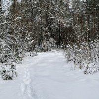 Прогулки по зимнему лесу :: Милешкин Владимир Алексеевич