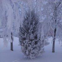 Зима :: Алена Васькова