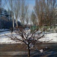 Деревце :: Нина Корешкова