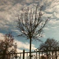 Деревья, забор и небо. :: Анатолий. Chesnavik.