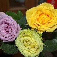 Розы :: Евгения Трушкина