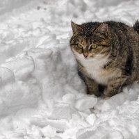 Любительница снега... :: Ирина Шарапова