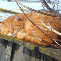 Я на солнышке лежу.... :: Татьяна Носова