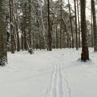 Лес для любителей лыжных прогулок :: Милешкин Владимир Алексеевич